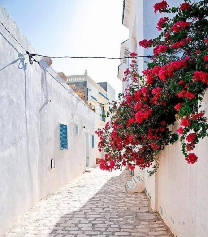 Rue//Village Hergla//Hergla est une ville côtière située à une vingtaine de kilomètres au nord de Sousse et rattachée au gouvernorat de Sousse. C'est une petite ville comptant 6 332 habitants en 2004. Wikipédia