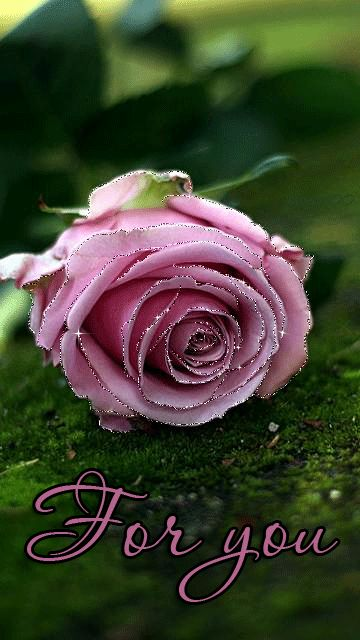 Decent Image Scraps: Beautiful Rose