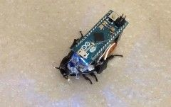 Every few years, cockroaches find themselves conscripted into humanity's ongoing endeavours to build proper cyborgs. And this example from Instructables may be the cheapest venture yet. A user calling themselves bravoechonovember1 recently released guidelines on how to control a roach with an Arduino