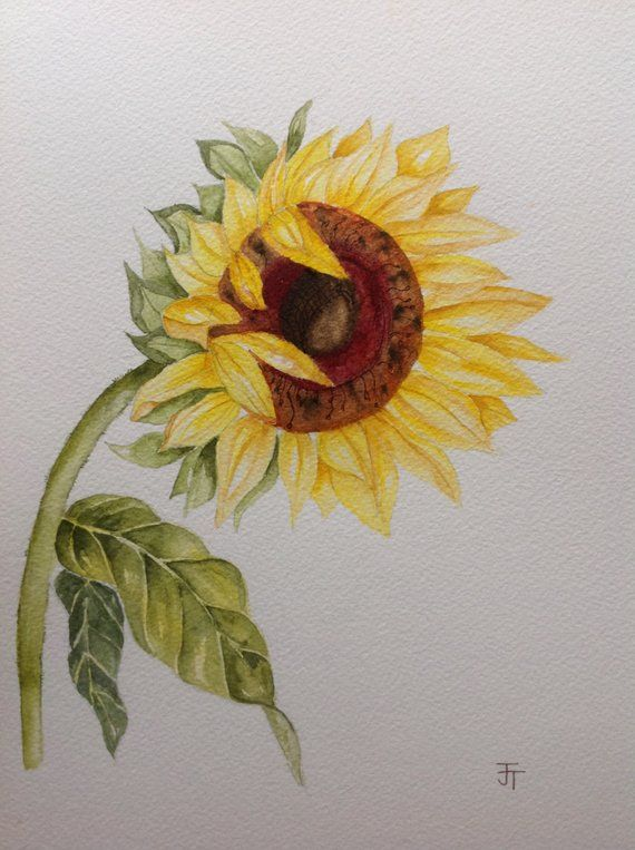 Original Watercolour Painting Of A Sunflower Watercolour Flowers