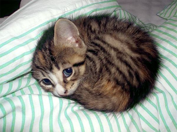 Look, I just want to take a nap, stop the vacuum now, human! Cute awesome cat is your master...
