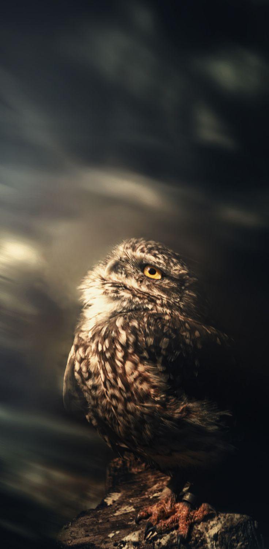 Little Owl by TasosKDs on 500px