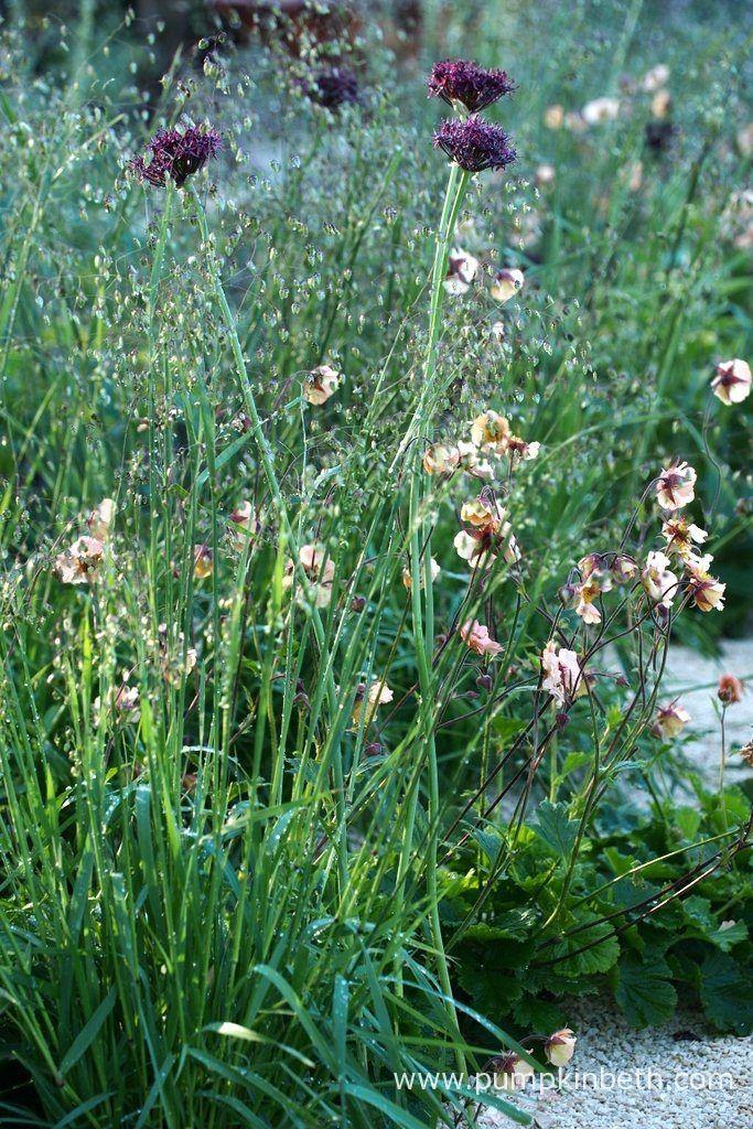 Allium atropurpureum, and Briza media combine with Geum 'Mai Tai', in The Winton Beauty of Mathematics Garden, at The RHS Chelsea Flower Show 2016.