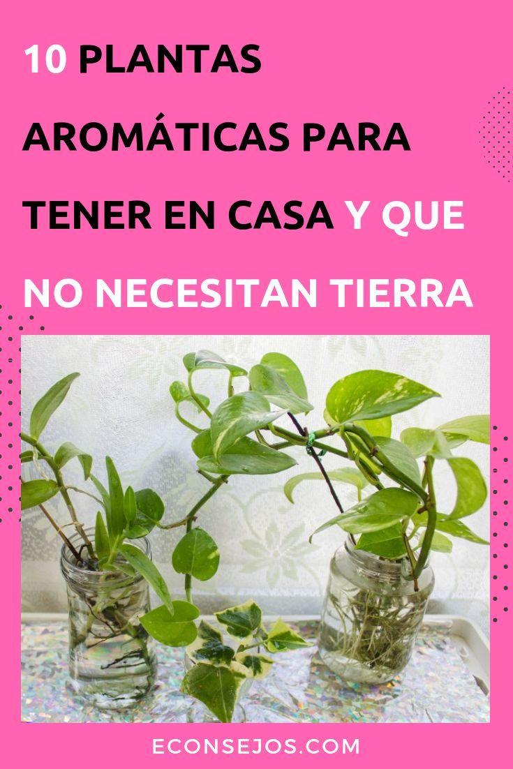 10 Hierbas Aromáticas Que Puede Cultivar En Casa Usando Sólo Agua Plantas De Lavanda Plantas Aromaticas De Interior Plantas