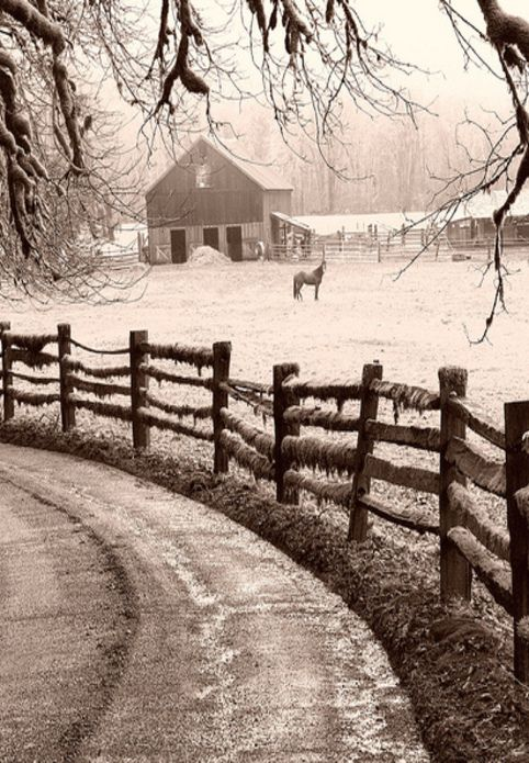 Winter Storm, Barn, & Horse In Barnyard