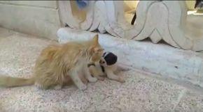 Der Welpe weint, die Mutter ist fort – dann greift diese Katze ein