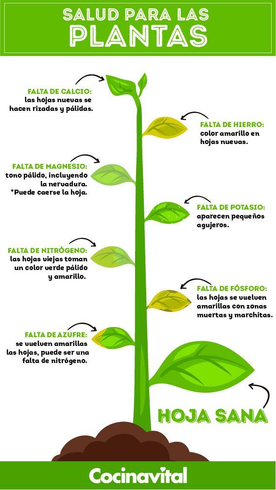 Insecticidas Caseros Para Eliminar La Plaga De Tus Plantas Cocina Vital Qué Cocinar Hoy Fertilizante Para Plantas Jardinería De Invernadero Cultivo De Plantas