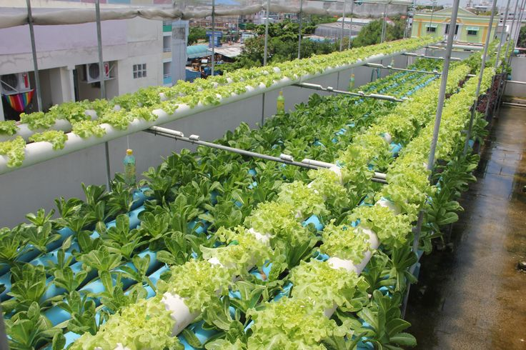 19 best images about our hydroponic garden on pinterest for Hydro gardens