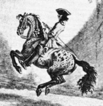 Johann Elias Ridinger Spanish Jennet Horse History