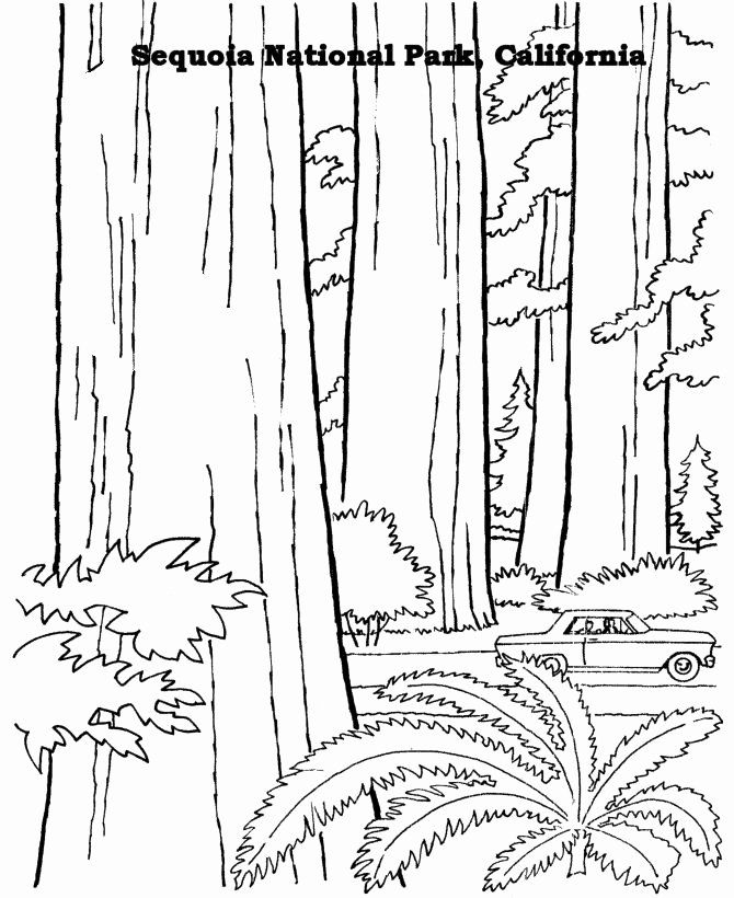 National Coloring Book Day Luxury Free Printables For Sequoia National Park In 2020 Tree Coloring Page Coloring Pages National Parks