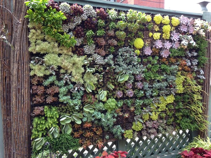 The 2015 Ripley Garden green wall. Read how our horticulturist created this succulent masterpiece on the Smithsonian Gardens blog - http://ow.ly/PrGEx