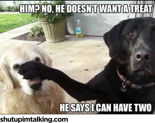 Sup Dawg http://shutupimtalking.com/sup-dawg/
