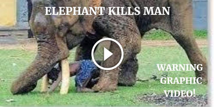 elephant killing people, elephants kill, man gets killed by elephant, elephants going crazy, when elephants attack, killer elephants, elephants, wild animals kill