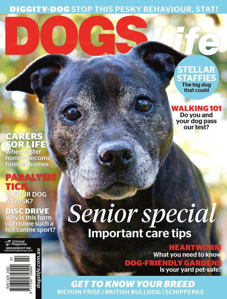 Get your paws on the tail-waggingly good senior special of DogsLife! #dogslifemag