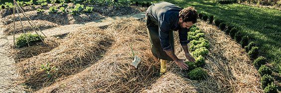 Faut-il faire un paillage avec l'herbe de tonte ? comment faire le paillis ? conseils pratiques et astuces pour réussir son paillage avec la tonte de gazon