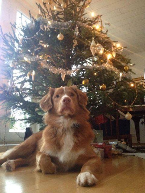 Topi waiting for Santa Claus