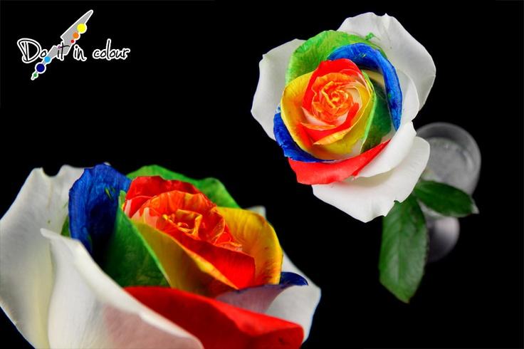 La rosa colorata rappresenta l'originalità e la follia, due elementi fondamentali per non assecondare tutto quello che ci viene proposto. Pensate con la vostra testa, e se una cosa non vi piace, modificatela, miglioratela, cerchiamo insieme di rendere questo passaggio sulla terra il migliore possibile.    Per la realizzazione di questa foto ringrazio Alberto Fusina per l'aiuto dato.