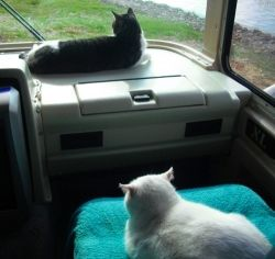 Two cats pour out their woes from an RV.