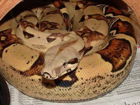 Got to make Snake cake... eeeeekkkk!! - CakesDecor