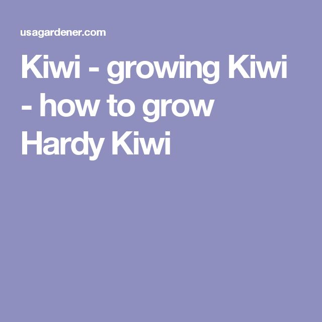 Kiwi - growing Kiwi - how to grow Hardy Kiwi