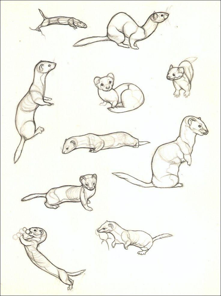 77 besten ferret Bilder auf Pinterest   Frettchen, Filzen und Anatomie