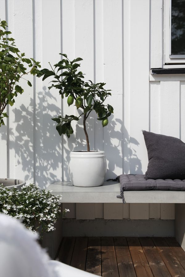 Lime tree in the the beautiful monochrome Norwegian home of Elisabeth Heier in summer time.
