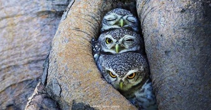 Photographer Captures Stunning Photos Of Owls Like You've Never Seen Them Before