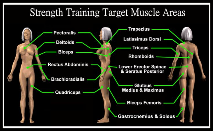 Target Muscle Groups | motivation/fitness | Pinterest ...