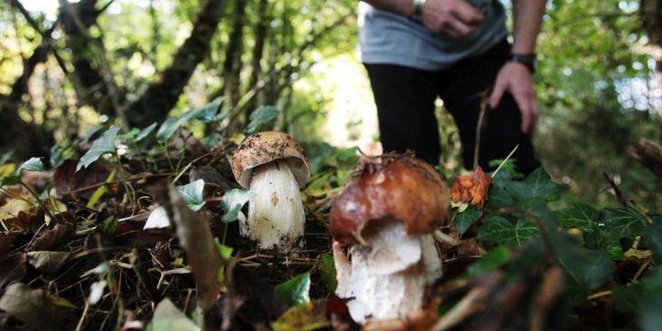 Ustaritz (64) : tabassée par un chasseur alors qu'elle cherchait des champignons