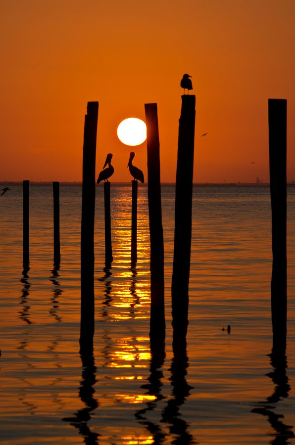 This moment... entre chien et loup... -- #sunset #silhouette - Pelican sunset,(Arabama)