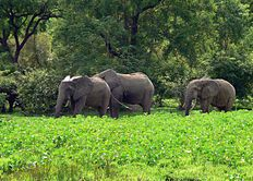 Tropical savanna climate and Safaris of the Northern region.