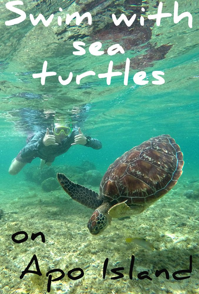 Ever wanted to swim with wild sea turtles? At Apo Island in the Philippines, there is a marine sanctuary where you can snorkel just a couple feet away from them!