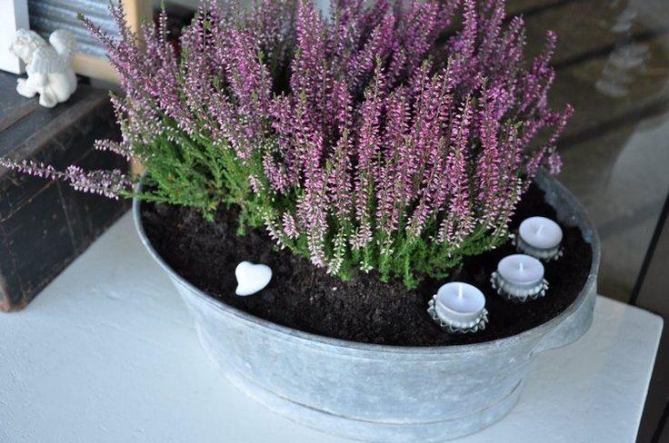 die besten 20 heide pflanzen ideen auf pinterest heidepflanze feuerstellen f r die terrasse. Black Bedroom Furniture Sets. Home Design Ideas