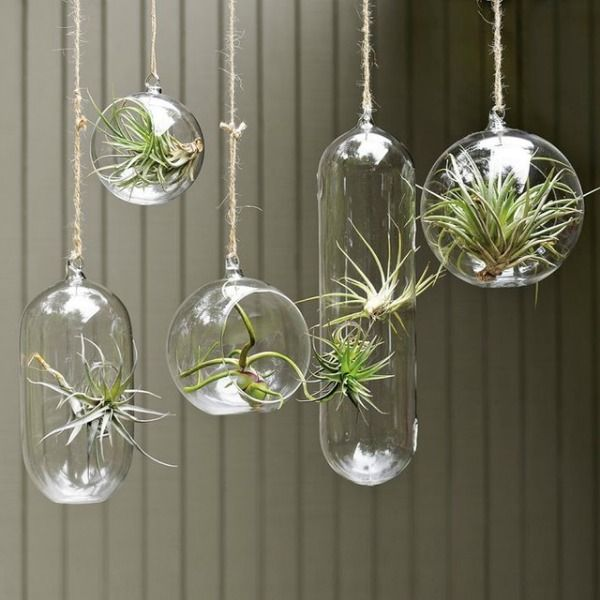 Hanging plants isn't necessarily a new concept, but there are all kinds of creative ways to display your hanging plants without resorting to the same old potted plant with a hook.