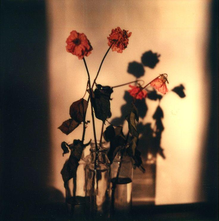 Walker Evans, Floral still-Life, 1973-74
