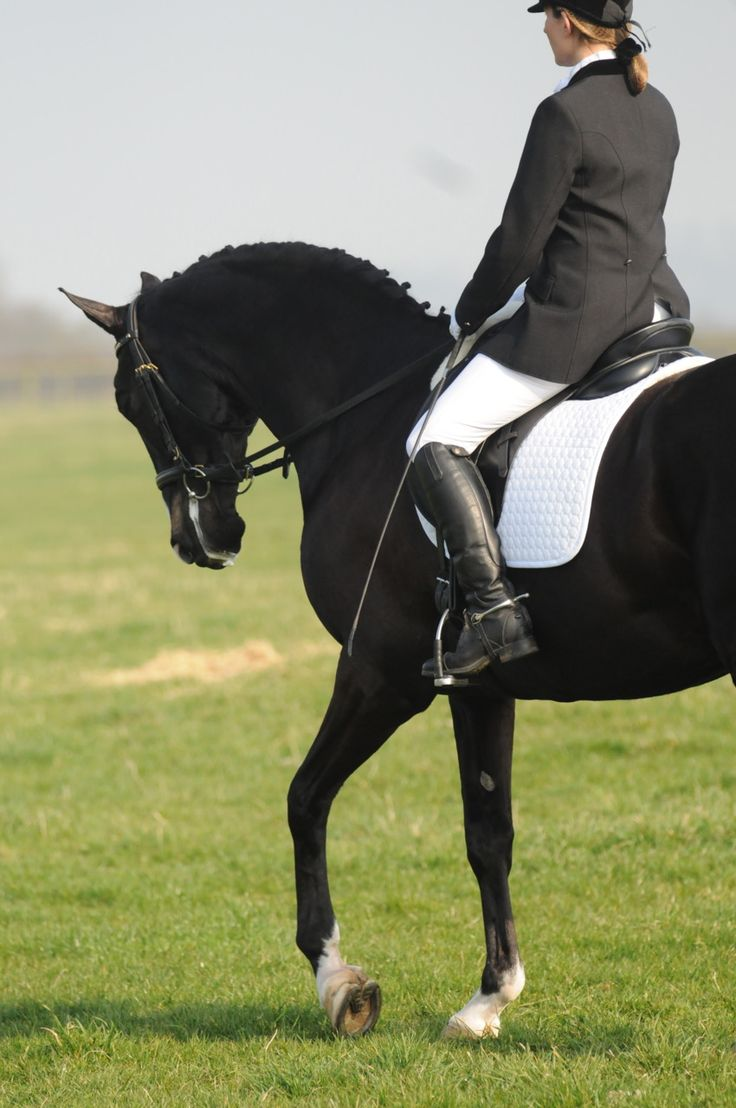 Beautiful Horse Riding #horses, #riding, #sports,single horse lovers dating club named  www.equestrianlover.com