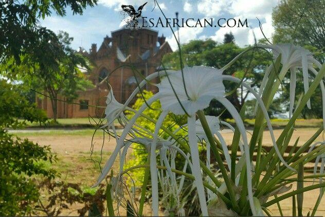 Flowers between St Michael 's Church & HHI Secondary School