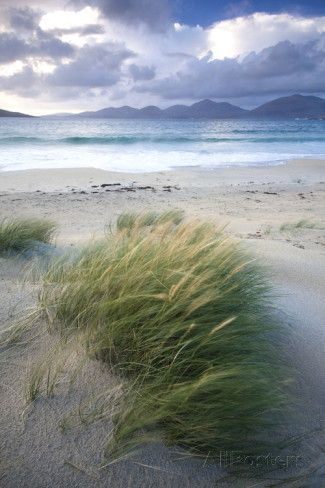 Beach at Luskentyre with Dune Grasses Blowing – Christine H.