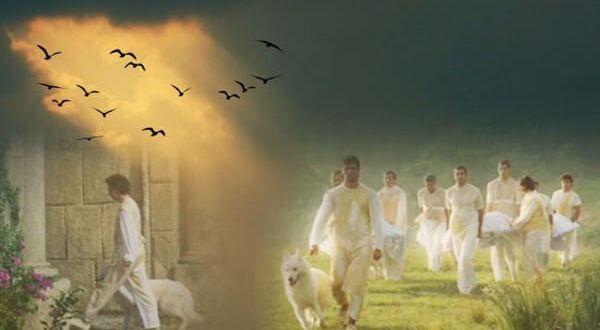 A vida dos animais depois que morrem também continua no plano espiritual, assim como a nossa, sendo recebidos e cuidados por espír…   Espiritualidade, Animais, Vida