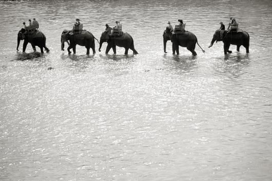 Elephant Ride af Julie Aucoin