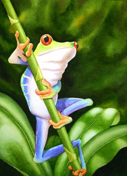 Michelle Goll Smith's Art Gallery - Tree Frog watercolor