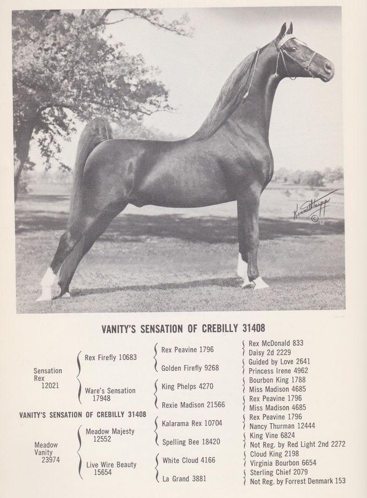 Best Show Horses Images On   American Saddlebred