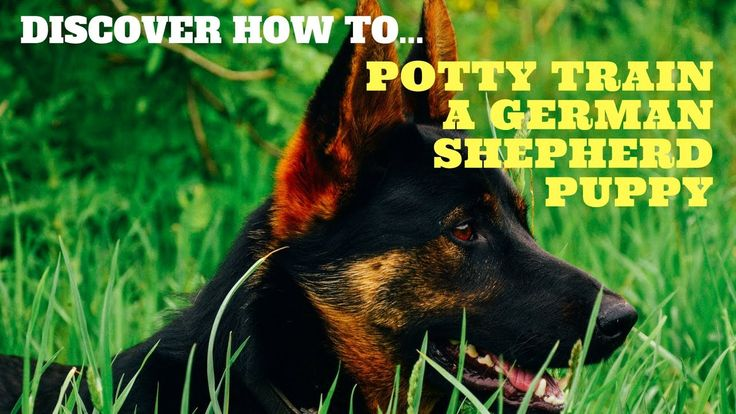 how to potty train a german shepherd puppy
