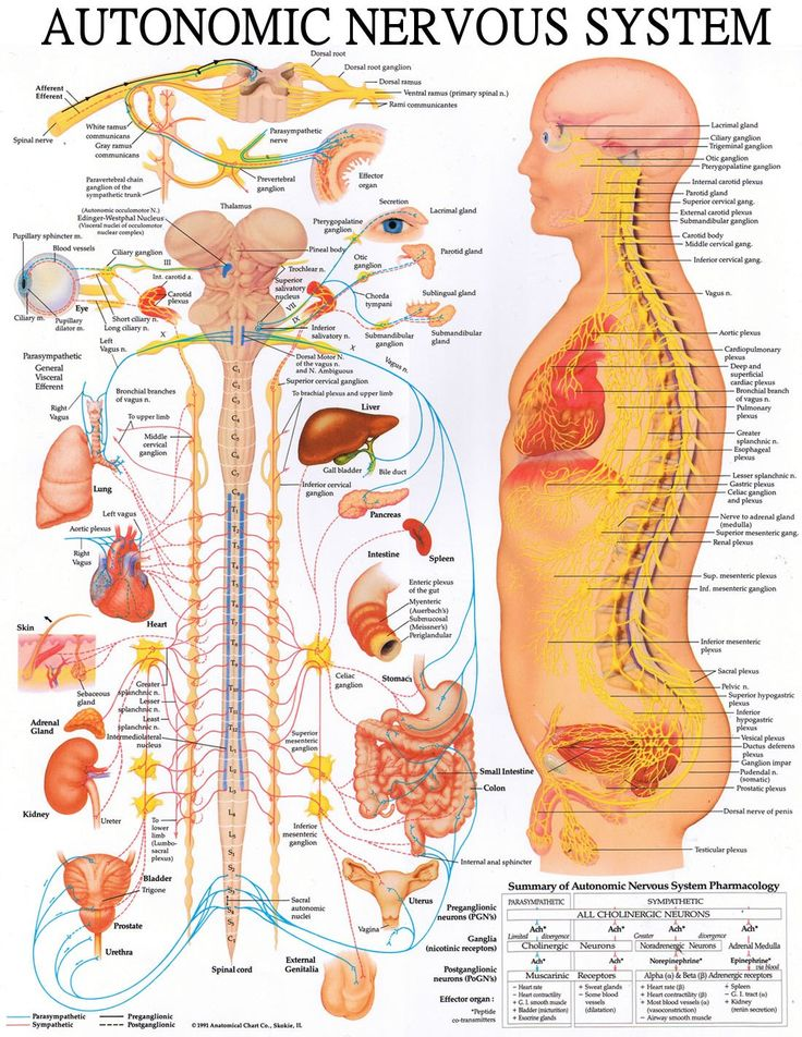 Spinal health matters for all your organ functions, immunity and overall health.
