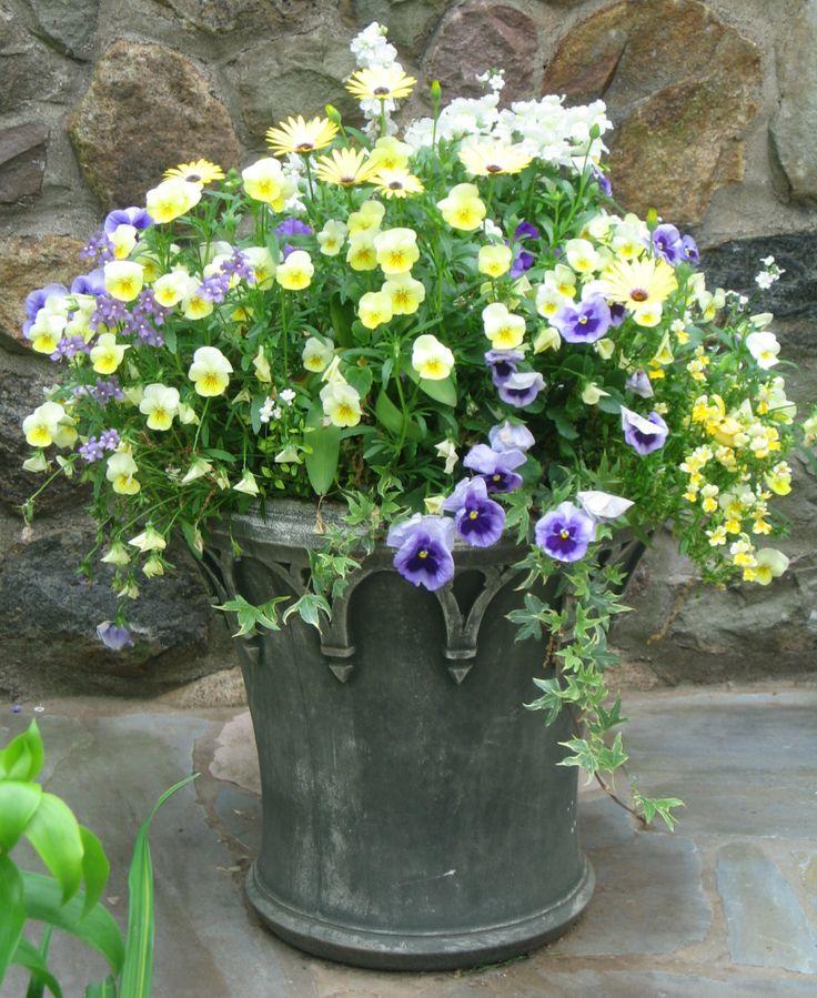 96 Best Images About Wpc Planter Pot: 96 Best Spring Planters Images On Pinterest