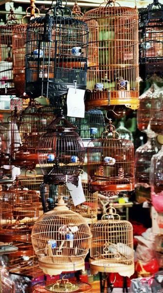 Bird market in Kowloon - fun to browse, a good low key afternoon outing, near the Flower Market and Goldfish Market