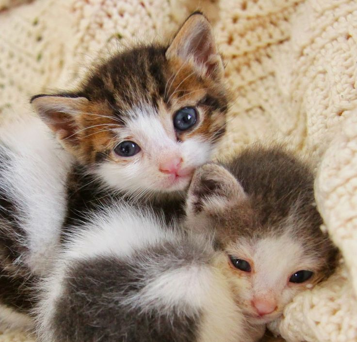 For the Strays: Mission - Kitten Rescue