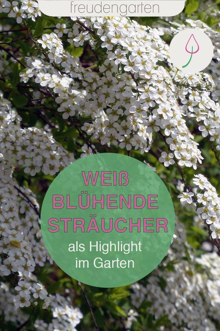 Weiss Bluhende Straucher In 2020 Weiss Bluhende Straucher