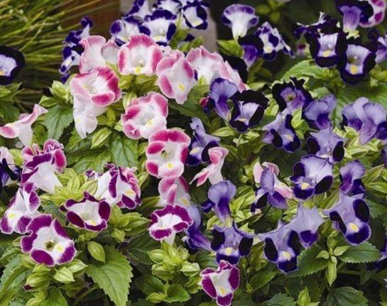 Daftar nama bunga, gambar bunga cantik, indah, unik, dan langka, lengkap dengan penjelasannya. Kumpulan macam-macam bunga hias terlengkap ada di sini.