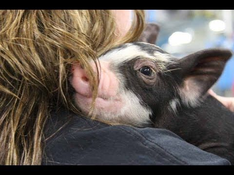 17 best fundraising ideas images on pinterest fundraising ideas add fun and excitement to your campaign the ideas are limitless kiss the pig solutioingenieria Image collections